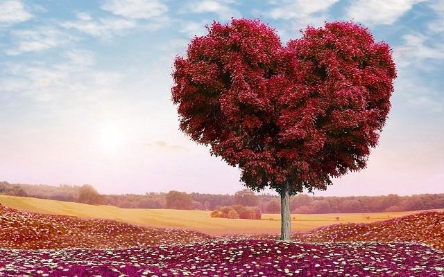 Giá trị của tình yêu thương trong cuộc sống
